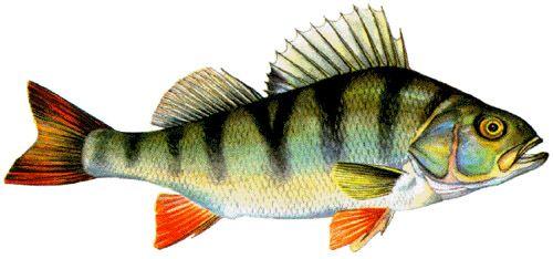 Trouver tout sur la meilleure pêche