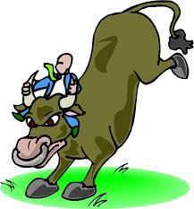 Bulls can jump over fences...