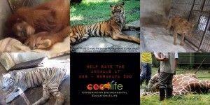 Surabaya Zoo Animal Social Media Welfare Action | dandy