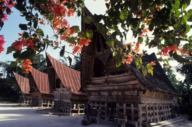 Traditional houses of the Toba Batak people on the island of Samosir in Lake Toba. The vines are bougainvillea.