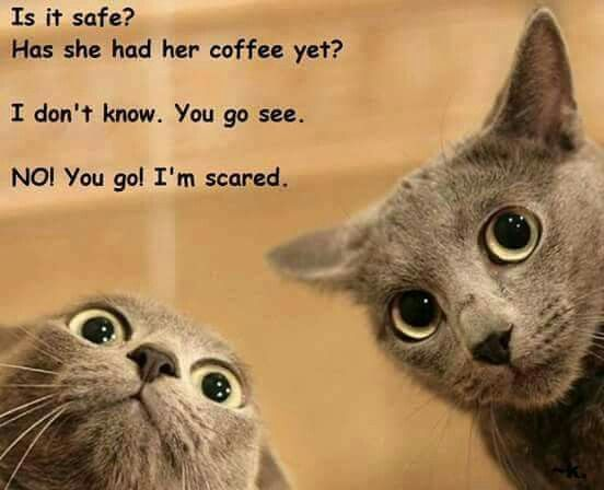 I can see my cats being this way...my coworkers also