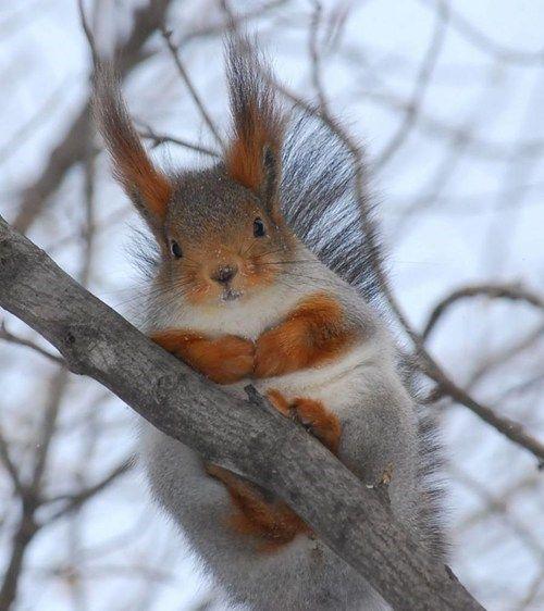 Fuzzy Fuzzy Ears.