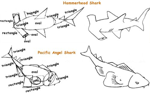 pacific angel shark and hammerhead shark sketches