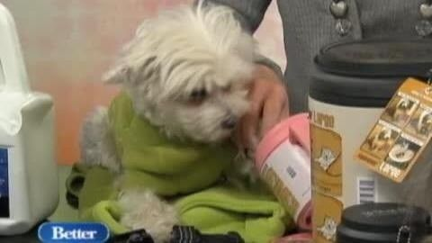 Pet expert Wendy Diamond tells us a few ways to make sure your pets are safe this winter. From fancy jackets to pet friendly snow salts, Wen...