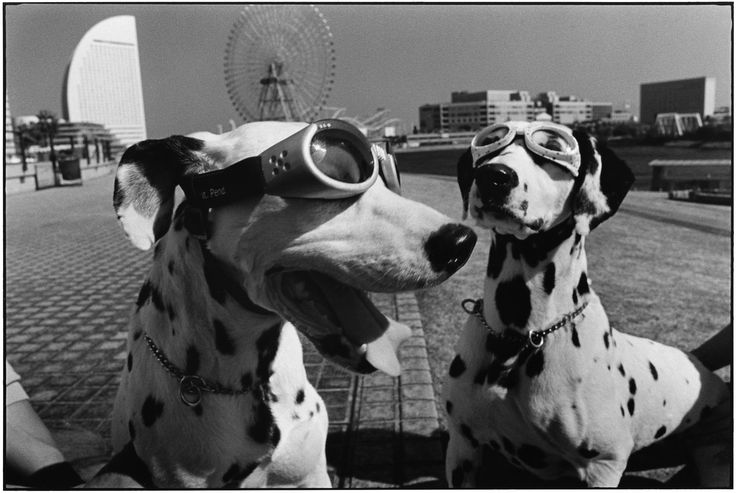 Elliott Erwitt - JAPAN.-Yokohama -repinned by LA County, California photographer…