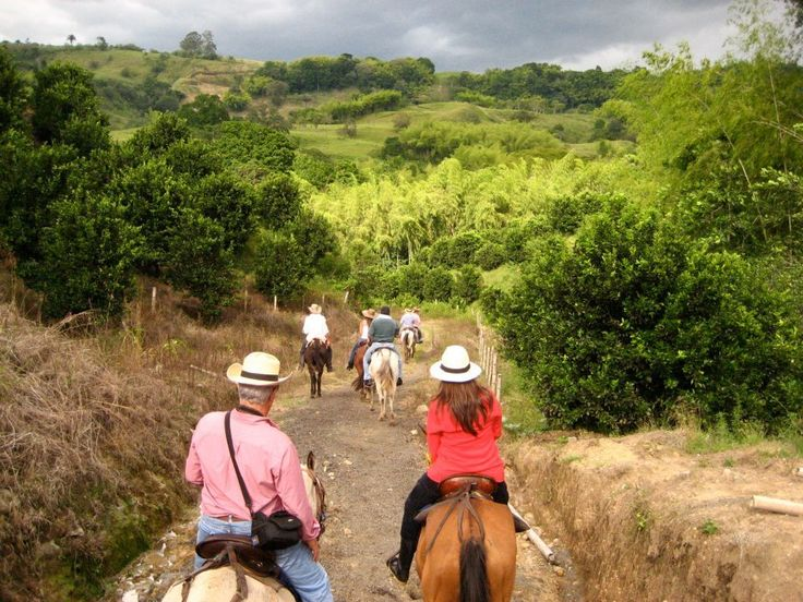 Enjoy a half day horseback ride through coffee plantations and the unforgettable landscape of the Colombian Coffee Region of Quindio on this day tour.