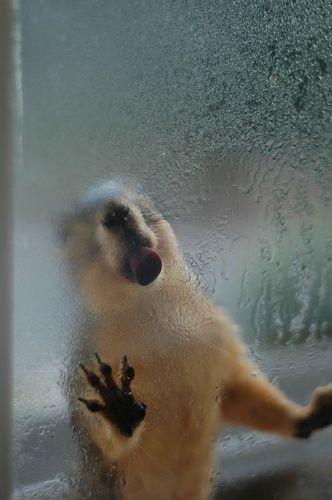 squirrel-tounge.jpg (332×500)