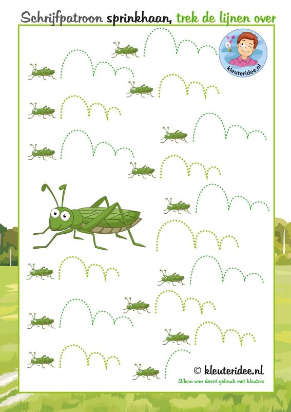 Sprinkhaan schrijfpatroon , thema kriebelbeestjes voor kleuters, kleuteridee, free printable.