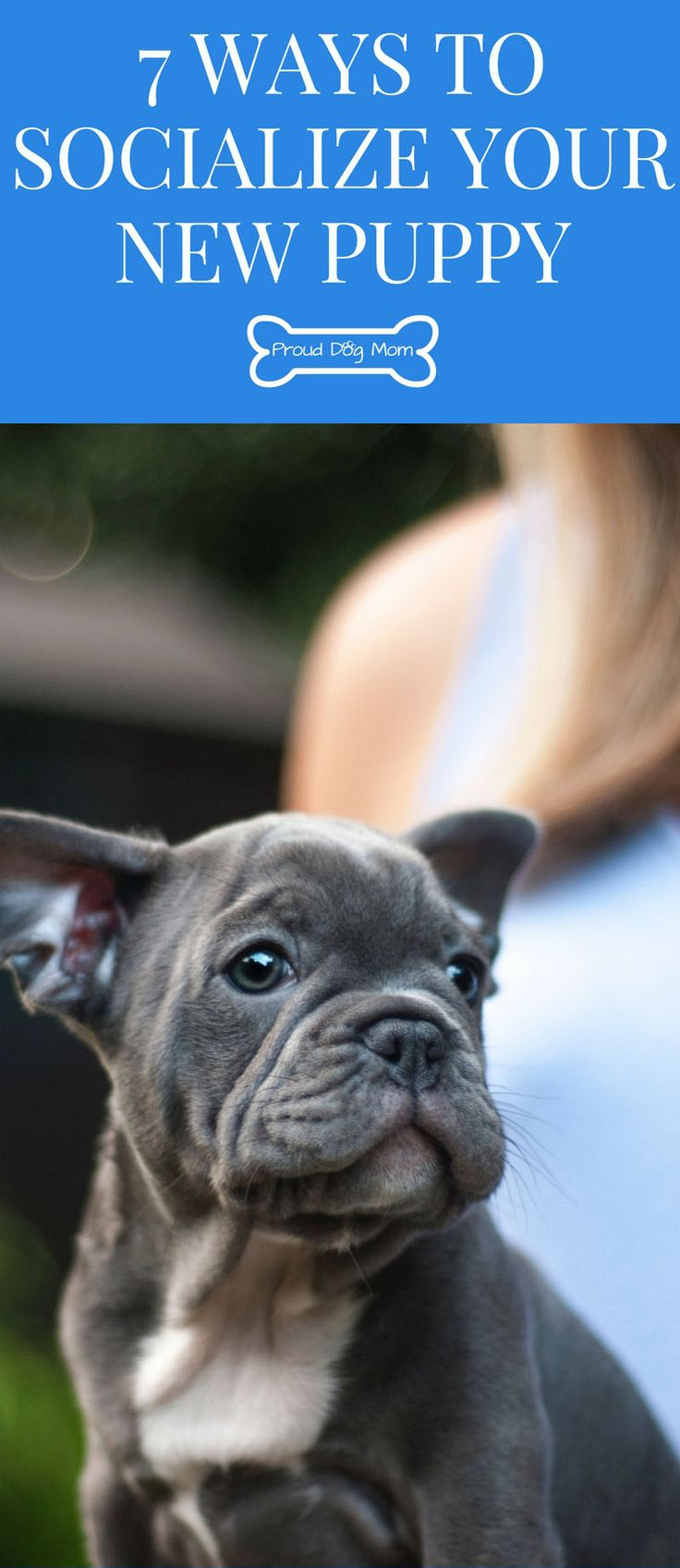 7 Ways To Socialize Your New Puppy | Dog Training Tips | Dog Care Tips |