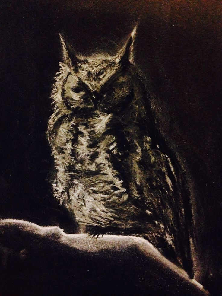 Owl of Prince Albert, chalk pastel on black paper. Steve Hurt