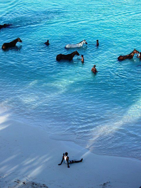 Barbados: Wake up early and go watch the horses swim #Caribbean