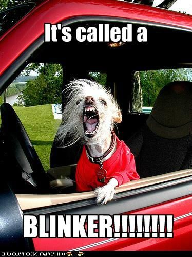 haha!: Blinker, Funny Stuff, Funnies, Humor, Pet Peeve, Dog, Animal, Road Rage