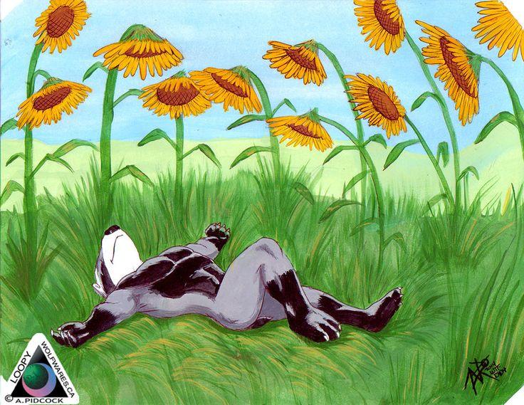 Didy in a field of sunflowers by LoopyWolf.deviantart.com on @deviantART