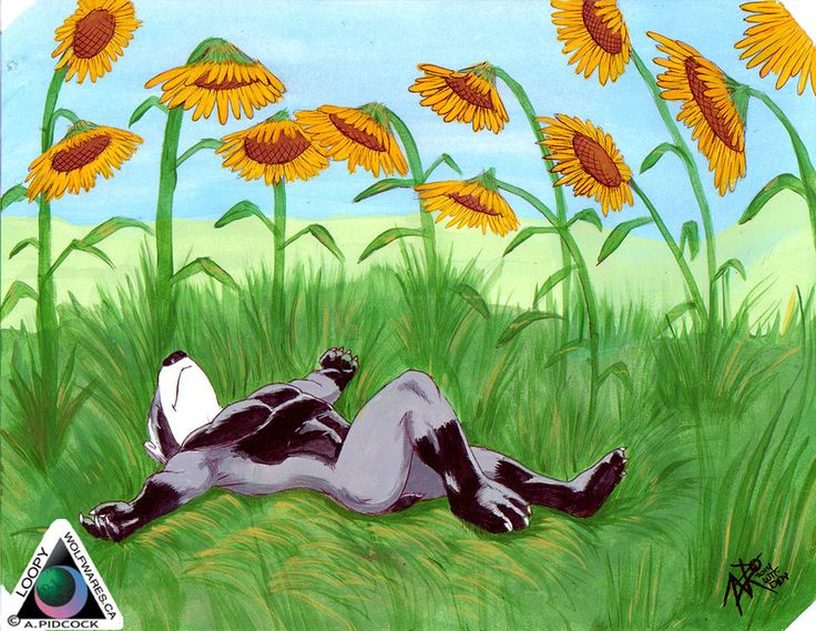 Sir Didymus in Sunflower field