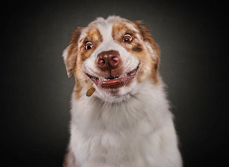 Christian Vieler fotos divertidas perros 7