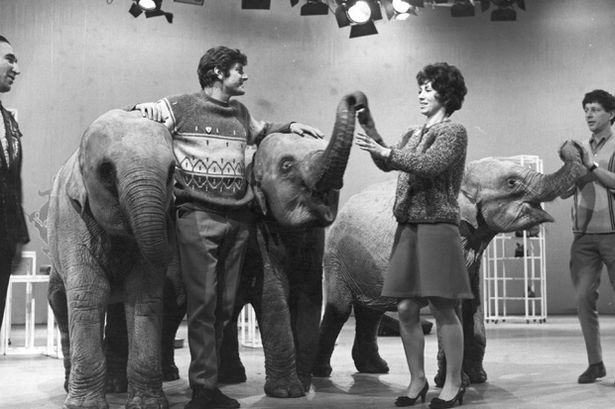 The Blue Peter team (left to right) Peter Purves, Valerie Singleton and John Noakes with Indian elephants 'Dum Dum', 'Sarah' and 'Emma'