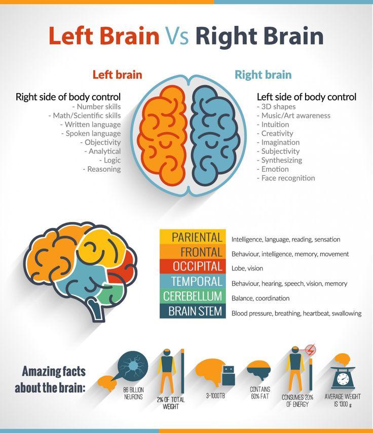 The Left Brain Vs Right Brain Confusion Infographic