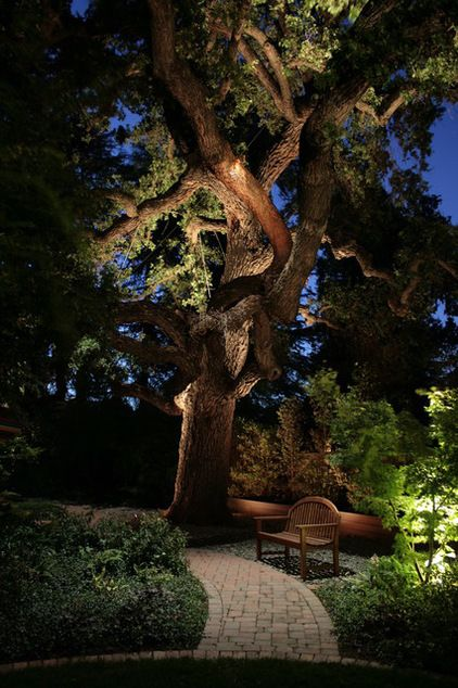 Uplighting trees can add drama to a night garden, particularly when the tree has a striking form. Huge, twisting branches seem alive when lit from within and below.