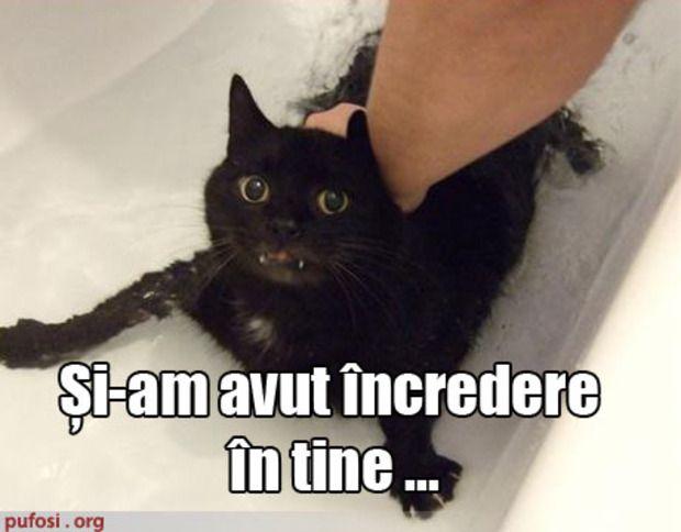 Poza amuzanta poze amuzante pisica tradata de stapan in cada cu apa