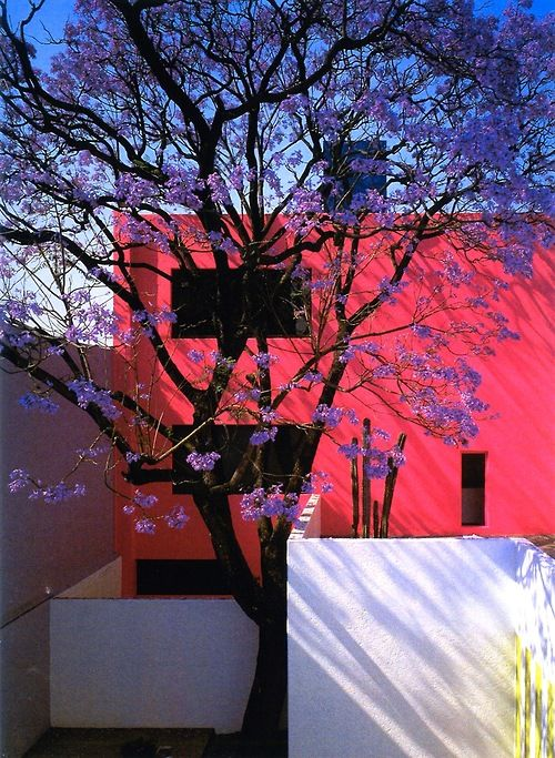 Am binging on Barragan today, Casa Gilardi in spring.