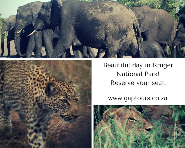 Beautiful day in Kruger National Park! Reserve your seat. Contact our office reservations: Info@gaptours.co.za www.gaptours.co.za