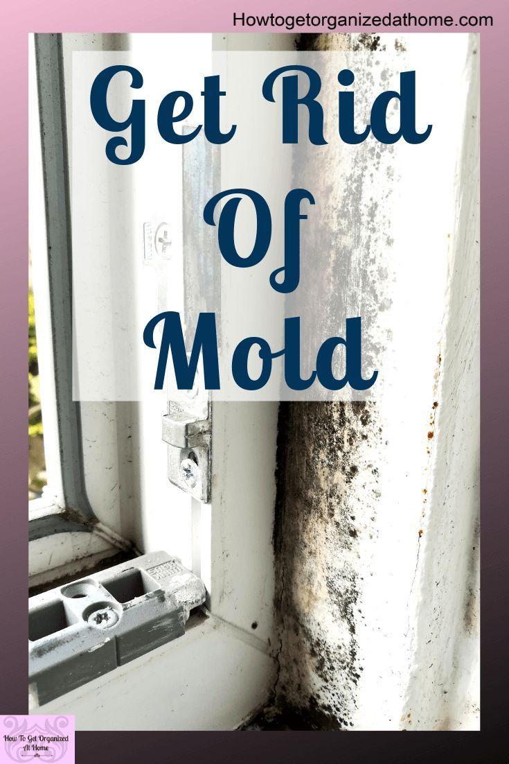 36a99d24a2827b6466475858a291b488 - How To Get Rid Of The Mold In The House