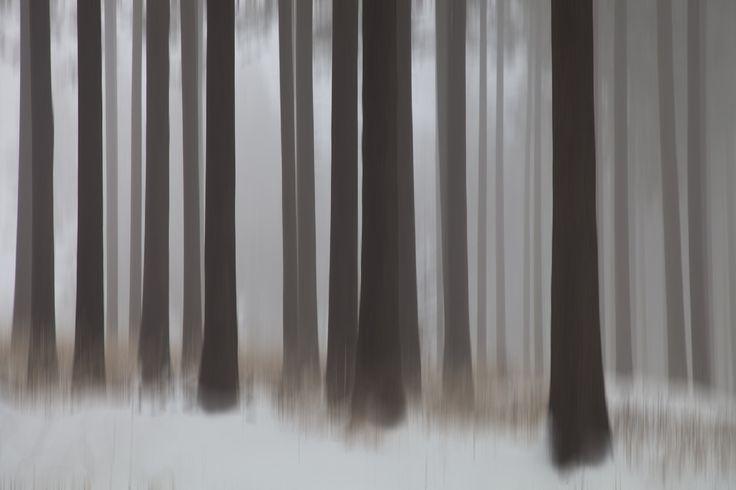 tree by Anna Klinkosz on 500px