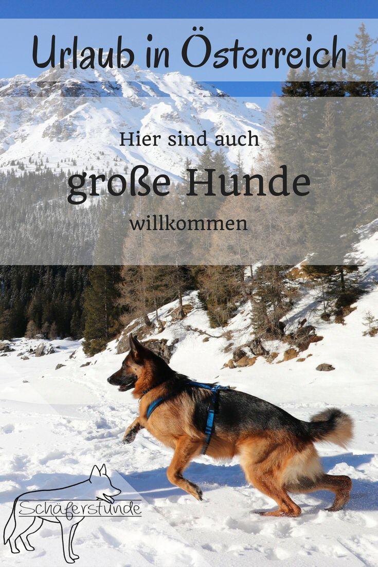 Winterurlaub Mit Hund Teil 1 Mit Bildern Winterurlaub Hunde Urlaub Mit Hund Osterreich