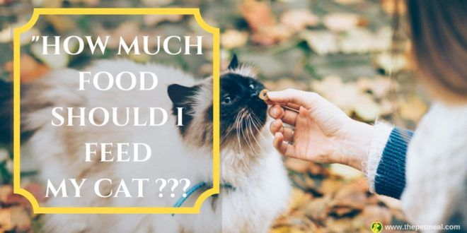 How Much Food Should I Feed My Cat If You Have A Cat Who Always Acts Like She Is Ever Hungry Then My Dear Ca Best Cat Food Cats And Cucumbers