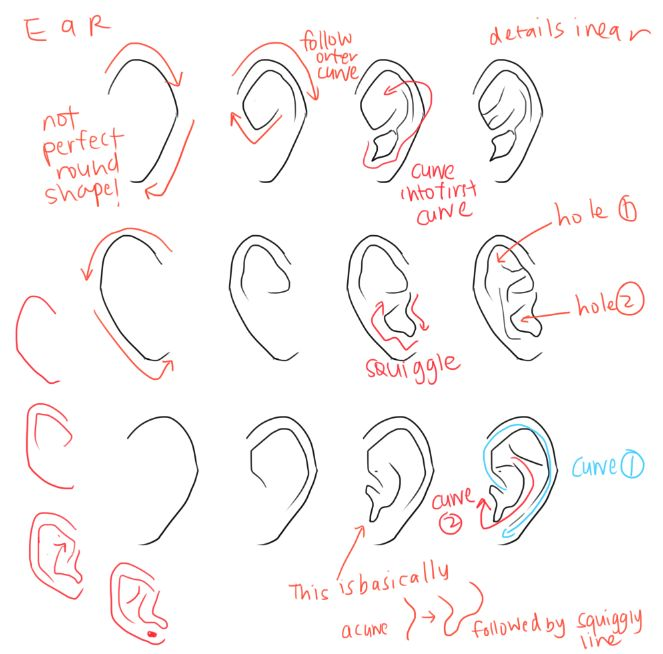 Character Design Techniques By Tokkun Academy : Best character anatomy ears images on pinterest