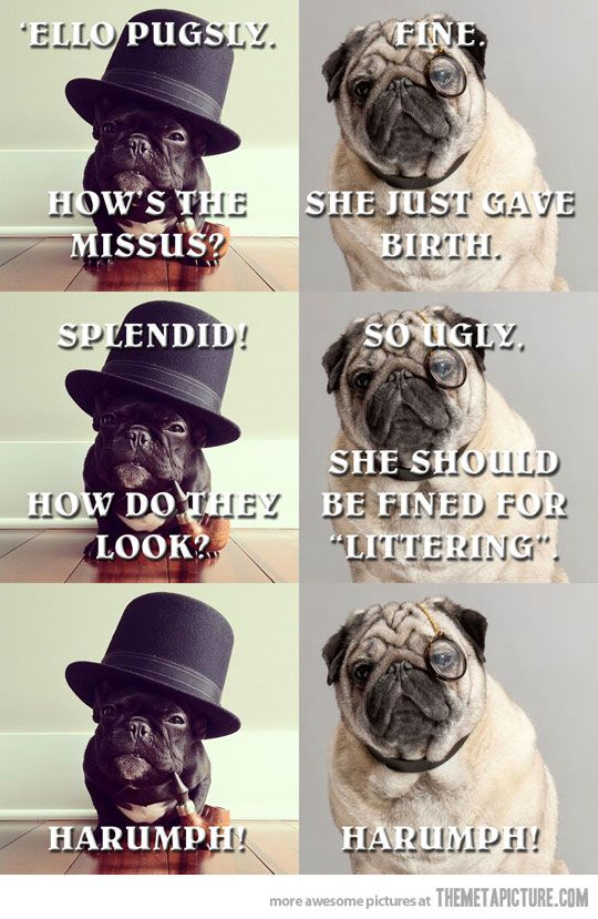 So mean, lol: Professor Pugsli, Doggies Funny, Intellectual Chat, Giggles, Dogs Humor, Funny Stuff, Ohhh Pugsli, Adorable Animal, Pugs And French Bulldogs