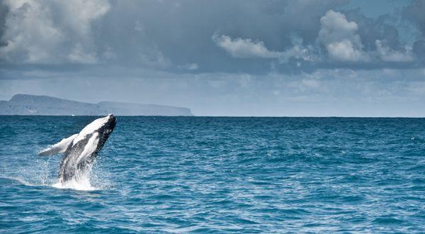 Наблюдение за китами на Доминикане #DominicanRepublic