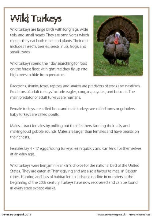 PrimaryLeap Reading Prehension Wild Turkeys