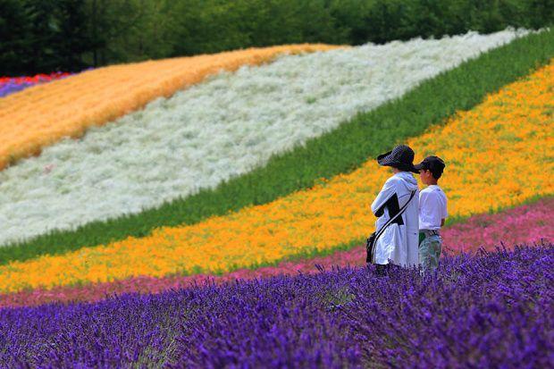 Farm Tomita Flower Fields, Furano. One of the best summer destination in Japan during Summer.