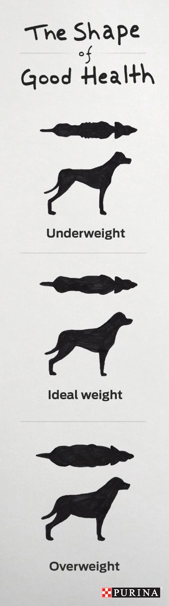 Is your #dog staying at a healthy weight? It's easy to check with just a glance.