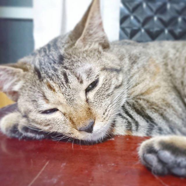 しおちゃんうとうと。  #しおちゃん#ねこ#ねこ部#猫#猫部#愛猫#もうすぐ2歳#女の子#にゃんこ#cat#catstagram#cute#love#ilovemycat#instaphoto#follow#うとうと#これ#絶対気持ちいい#寝方 * * * * * ** 質素でも安定したいのに なんでこうも安定せんねやろ? そういうのかなしいよねー(´._.`) 夏とかはやく終わればいいよ