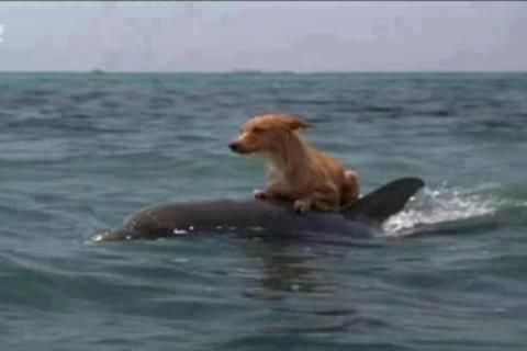 Dolphins Save Drowning Dog! -  On Marco Island, Florida a group of dolphins came to the aid of a lost Dog that had fallen into a canal and couldn't get out. The dolphins made so much noise, it attracted the attention of people living nearby, who then rescued the dog. The Dog was believed to have spent 15 hours in the canal water before he was pulled out by fire personnel and reunited with his owner.