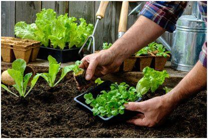 Az ültetés és a palántázás alapjai » Okos Kert és Otthon Magazin