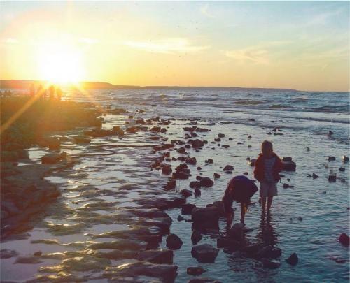 Dog Friendly Beaches In Muskoka