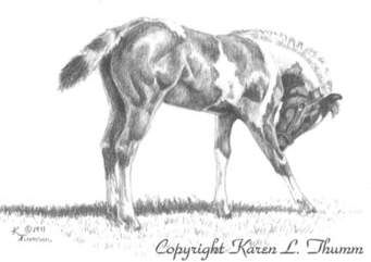 horse pictures to print - Ask.com Image Search