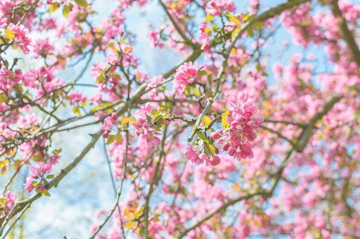 #spring in Prague