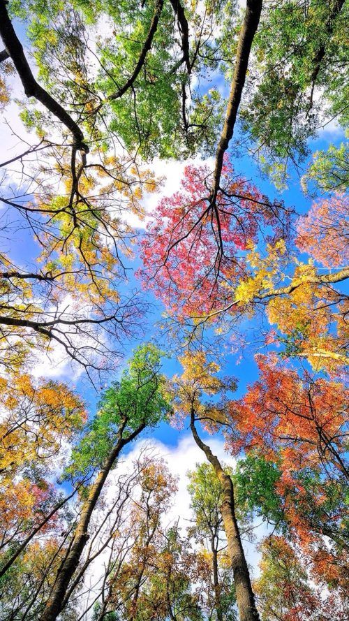 Cool Phone Wallpapers With Colorful Trees In Autumn Nature Wallpaper Colorful Trees Nature Photography