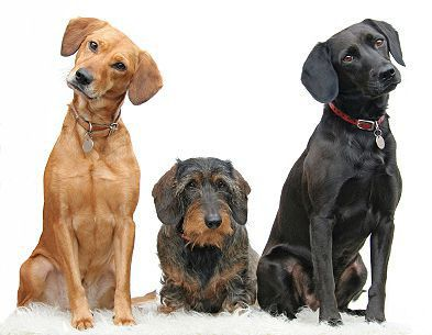Cute dogs waiting to be fed on our Dog Names by Breed page.  A Healthy Dog is a Happy Dog / www.PetWellbeing.org