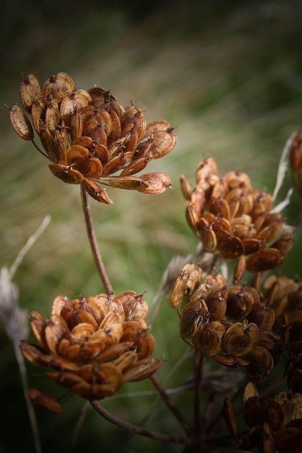 видом коричневый цвет картинки цветы фотографии баркас обводами