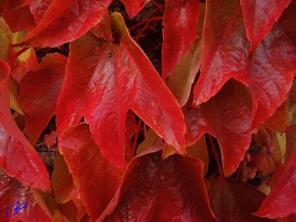 Autumn Colur Change .Photography Colette H . Guggenheim