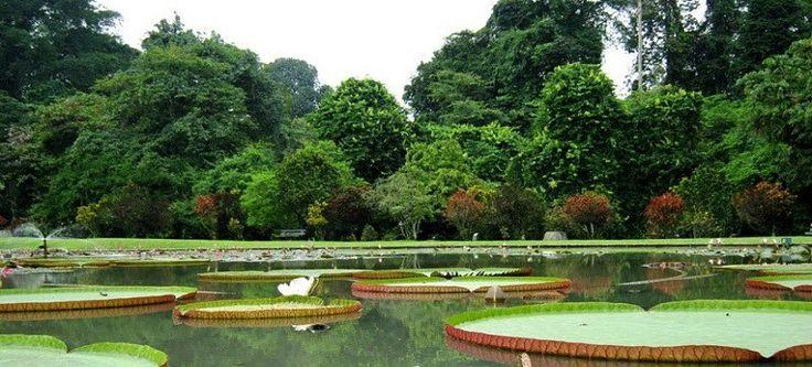 Kebun Raya Bogor - The Secret & Mistery BuitenZorg | Wisata Indonesia