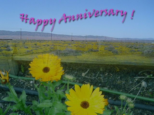 Wedding Anniversary Wishes for Friends