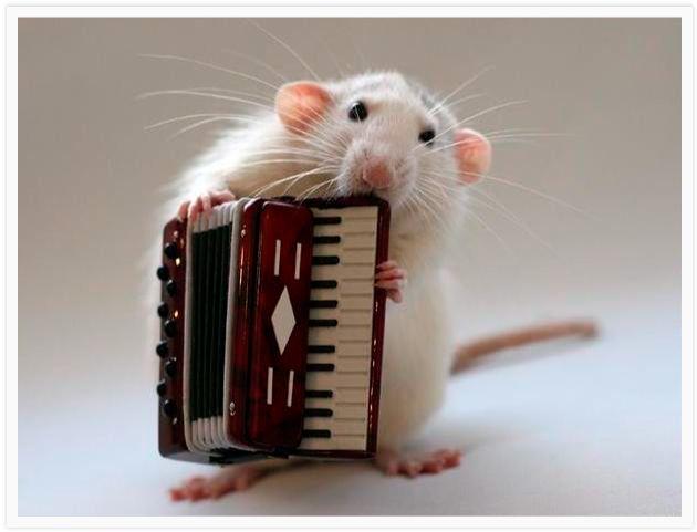 Rats Orchestra