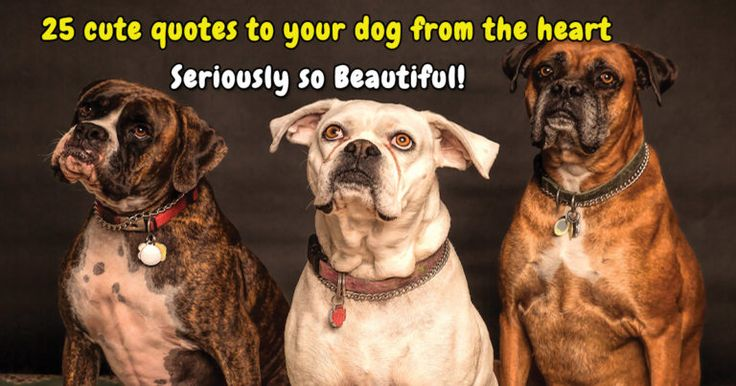 20 Dog Love Quotes That Express Exactly What I Love You Really Means Dog Love Dogs Puppies Dogs Dog Training