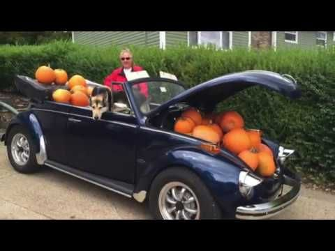 #MervsPumpkinPalooza | Natalie & I deliver 100+ pumpkins to our clients in October so that they can carve out some Fall fun | Re/Max Nova Halifax's Real Estate leader - Merv Edinger & Associates